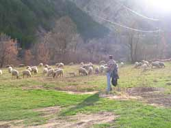 mouton4mini
